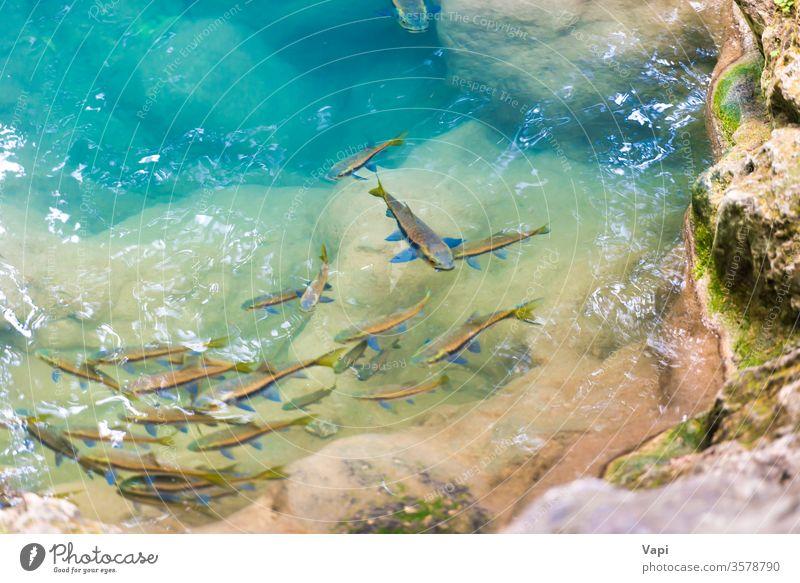 Rote Garra-Fische im Flusswasser See tropisch knabbern rot rufa erawan Natur Park Wasserfall strömen Schule fallen Felsen Wald Dschungel Hintergrund natürlich