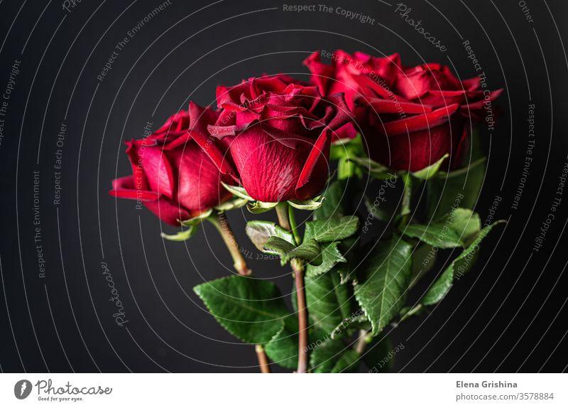 Rote Rosen auf schwarzem Hintergrund. rot 8. März dunkel Blumenstrauß Feiertag Tag Mutter Geburtstag Heirat Jahrestag Romantik romantisch geblümt Geschenk