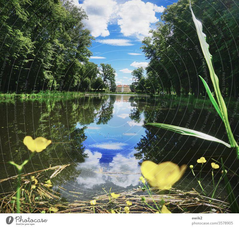 Seeblick Park Teich Bäume Wald Wasser Grashalm Butterblumen Reflexion & Spiegelung Wasserspiegelung windstill Natur Außenaufnahme Menschenleer Farbfoto