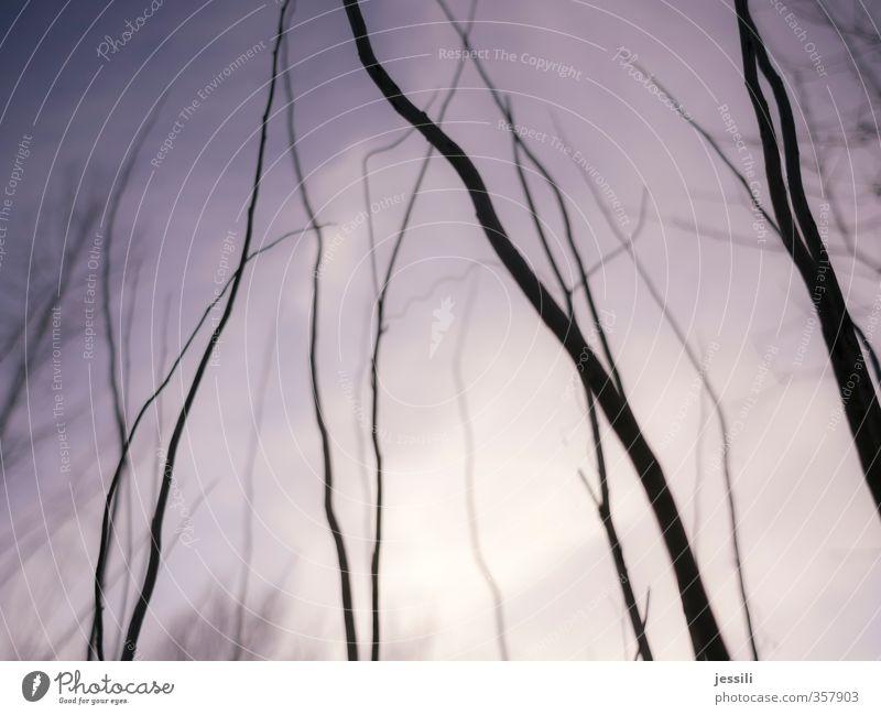branches Himmel Natur blau weiß Baum Erholung schwarz Bewegung Frühling Wege & Pfade Holz Wachstum Sträucher Beginn kaputt einfach