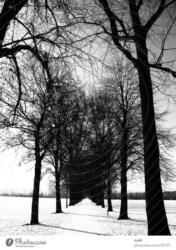 go on Wald Ferne schwarz weiß Baum Horizont Wege & Pfade Schnee Himmel