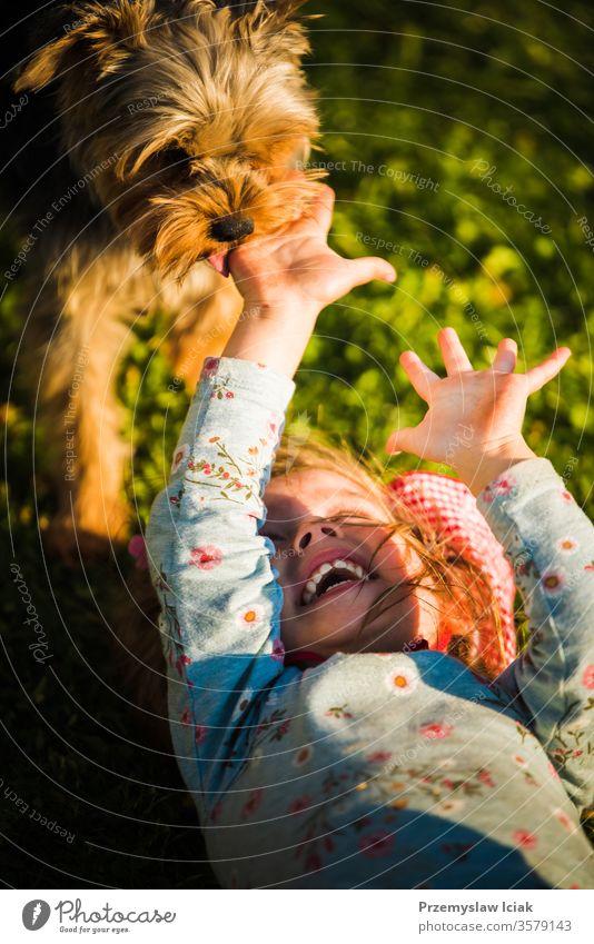 Porträt eines schönen kleinen 2-jährigen Mädchens, das im Gras liegt und mit einem Yorkterrier lacht. Terrier Kind lecken Kindheit niedlich Spielen Hund