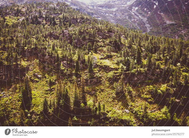 Wald in den Bergen Bäume Gebirge Berge u. Gebirge Stimmung grün am morgen