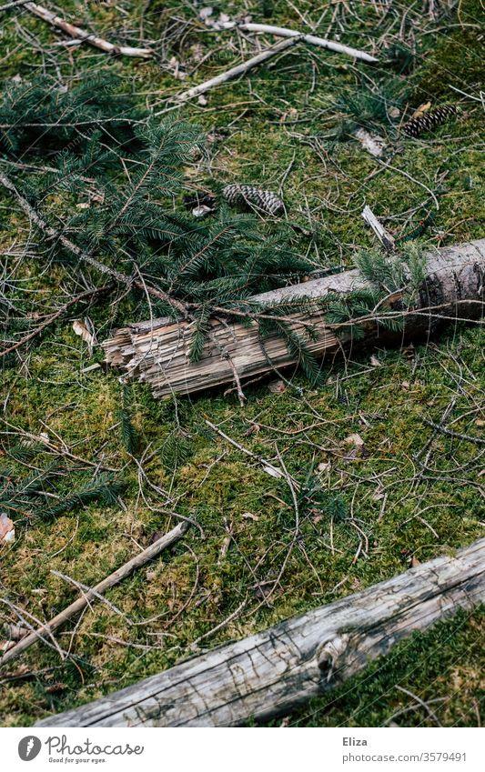 Moosbedeckter Waldboden mit Ästen, Zweigen und Tannenzapfen Textur grün moosbedeckt morsch Holz Birkenholz Birkenäste Natur Zweige u. Äste Menschenleer Umwelt