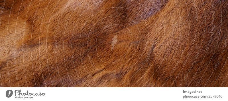 Kaninchen Fell rotbraun Hintergrund Textur. Fellhintergrund braun. Nahaufnahme eines Mantels - Kleidungsstück. Tierfell Hintergrund. Voller Rahmen des natürlichen Pelzmantels. Panorama