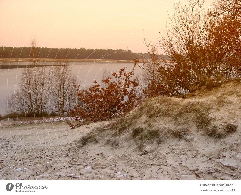 Abend am See Niedersachsen Sonnenuntergang Baum Winter Einsamkeit ruhig Sand
