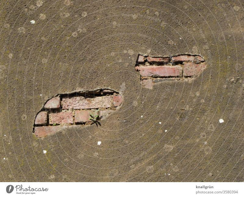 Große Löcher im Putz auf einer Ziegelsteinmauer, aus der ein kleines Grünpflänzchen wächst Mauer abblättern alt dreckig Pflanze Grünpflanzen Überleben