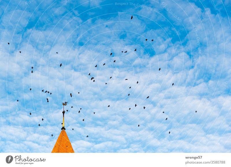 Dohlen umfliegen die Schwaaner Kirchturmspitze unter leicht bewölkten blauen Himmel Rabenvögel Schwarm Vogel Außenaufnahme Menschenleer Farbfoto Wildtier Luft