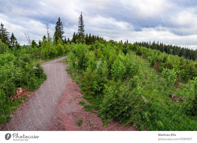 Thüringer Wald Waldweg im Forst Natur Erholung Umwelt grün schön Himmel Schönes Wetter Landschaft Freiheit Ferne Sonnenlicht Ferien & Urlaub & Reisen wandern
