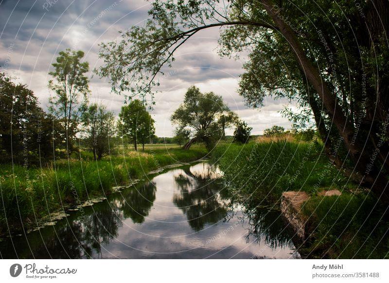 Ein Bewölkter Sonntag Spaziergang Wald Abendstimmung Wasser Fluss Natur Landschaft Himmel Baum grün Farbfoto Außenaufnahme Wolken Bach Reflexion & Spiegelung