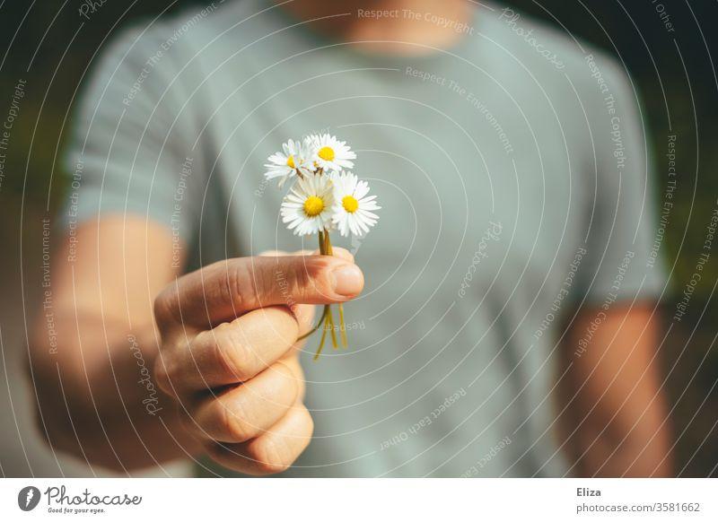 Ein Mann schenkt einen selbst gepflückten Strauß Gänseblümchen Zuneigung mitbringen Blumen Sträußchen Frühling Blüte nett aufmerksam geben Hand Geschenk