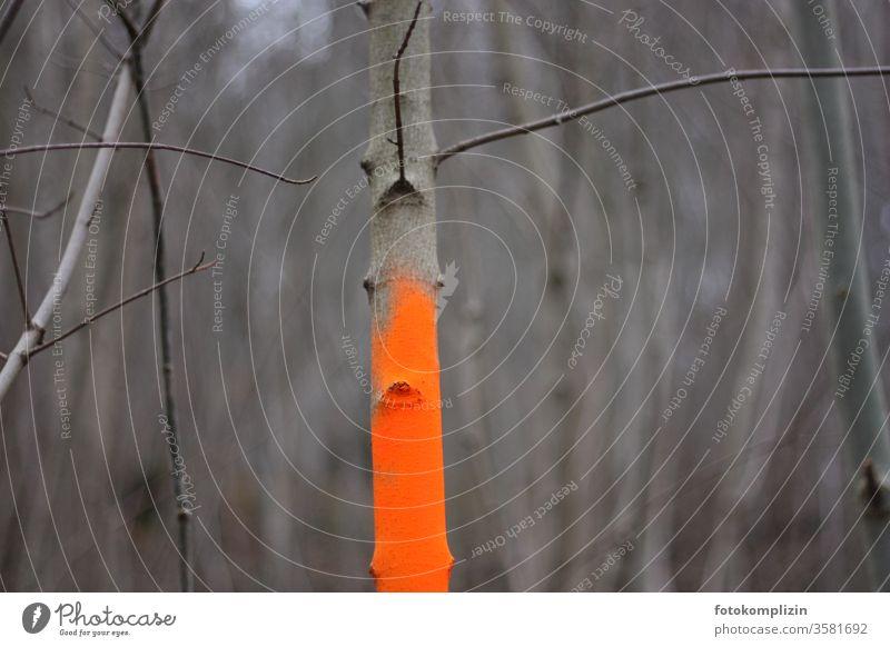 neon orange gekennzeichnetes Geäst Struktur Graffiti Einsamkeit neonfarbig neongelb neonorange Farbe farbenfroh Farbenwelt leuchten grau kahl leuchtfarbe