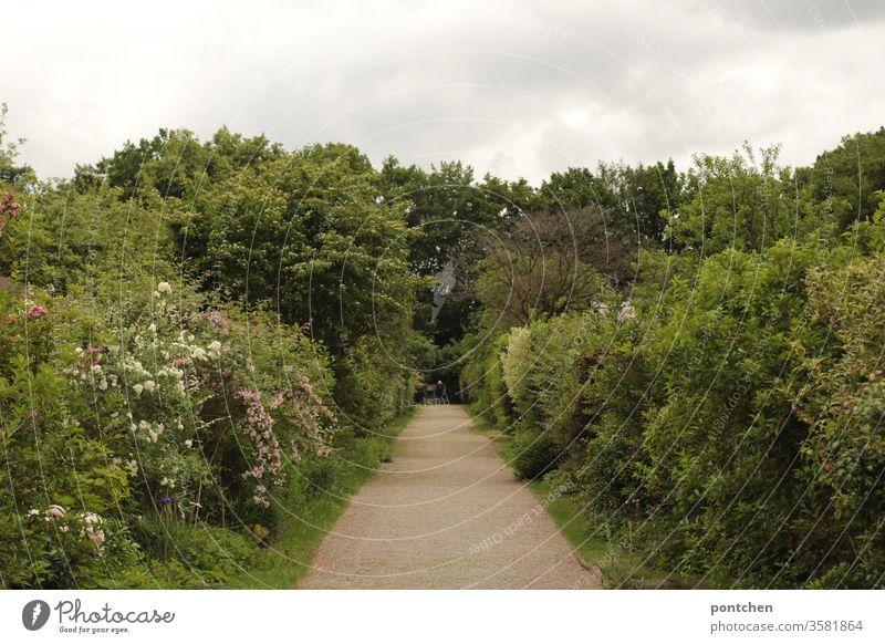 Weg in einer Schrebergartenanlage. Sträucher, Bäume, Blumen. Grüne Natur. Spießigkeit anpflanzen natur weg grün bäume sträucher blumen bewölkt blühen Frühling