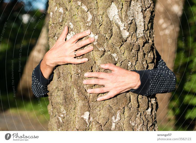 Hände einer Frau umfassen einen Baumstamm um die innere Ruhe zu finden Mensch weiblich Weiblicher Senior Erwachsene umklammern Birke Birkenstamm Birkenallee