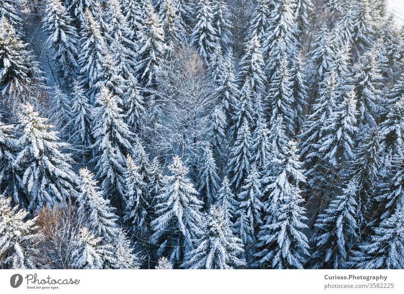 Schneebedeckter Kiefernwald in den Bergen, Luftaufnahme von oben. Winterlandschaft. Antenne Wald Ansicht Landschaft Natur weiß Saison Baum Hintergrund kalt