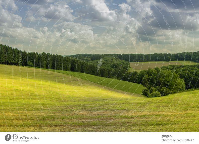 Licht legt sich über das Land Umwelt Natur Landschaft grün Sonnenlicht liegen Baum Wald Wolkenformation Schweben Tal Hügel Weide sanft abgegrenzt Grenze Feld