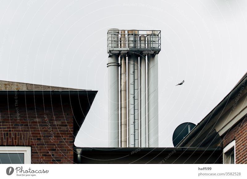 triste Schornsteine mit Vogel und Dach Abluft Lüftungsschacht Industriefassade Abgas Industrie Kullisse Fabrik Fassade Industrieanlage Umweltverschmutzung
