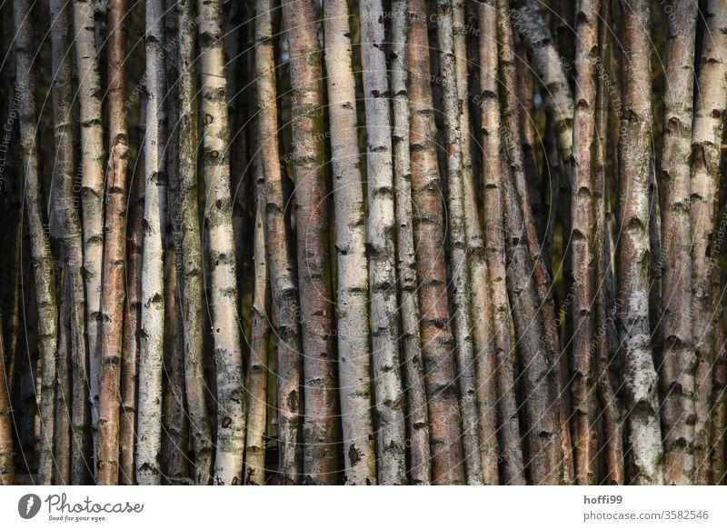 Birkenstämme - geordnet Stamm an Stamm Birkenstamm Baum Zaun Zaunpfahl Windschutz Baumrinde Birkenwald Baumstamm Rinde Pflanze Wachstum natürlich Birkenrinde
