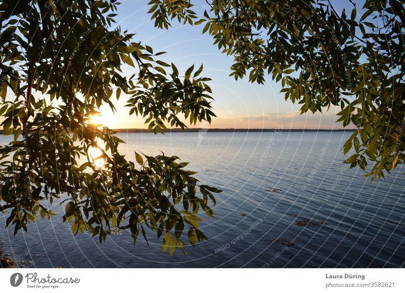 Blick durch Blätter auf den Sonnenuntergang am Wasser ruhig Ostsee Holnis Sonnenlicht Horizont Meer Himmel Außenaufnahme Natur Sommer Wellen Abend