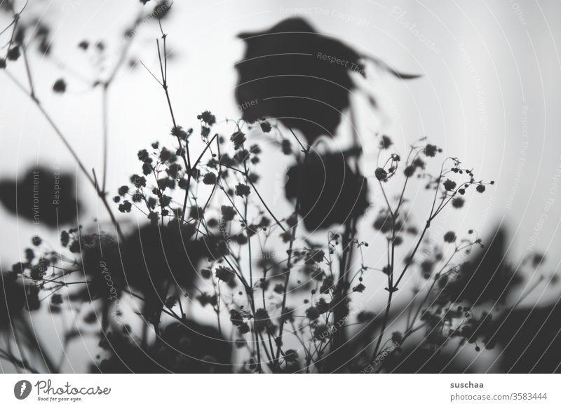 vertrocknete blumen im schatten | hell und dunkel Blumen Rosen Blumenstrauß getrocknet Trockenblumen Licht und Schatten Kontrast Hell-Dunkel-Kontrast Silhouette