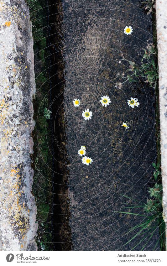 Elastisch blühende Blumen, die bei Tageslicht am Baumstamm wachsen Blüte Kofferraum Blütenblatt widerstandsfähig idyllisch Harmonie geblümt filigran elastisch