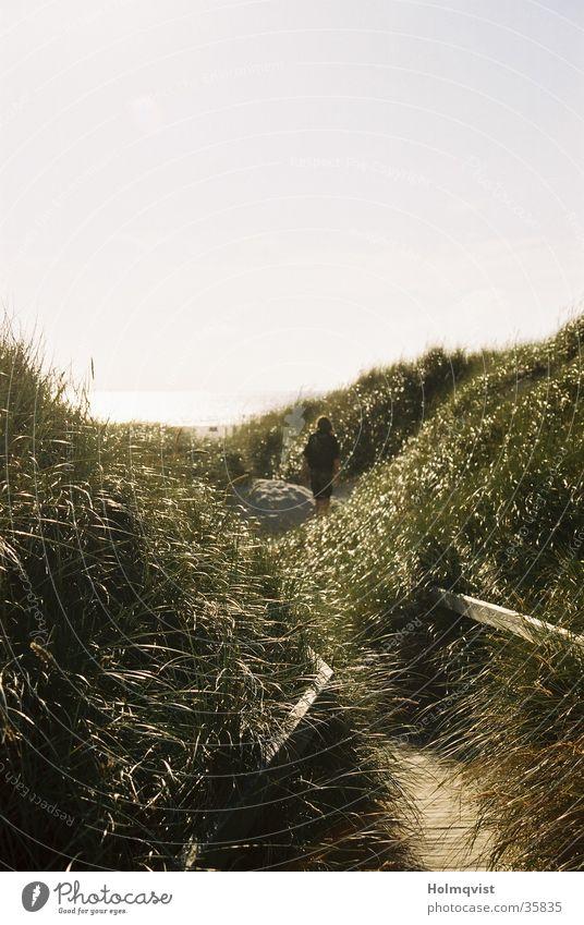 Dünenweg Meer Strand ruhig Einsamkeit Herbst Gras Wege & Pfade Graffiti Küste Insel Frieden Stranddüne Amrum Dünengras