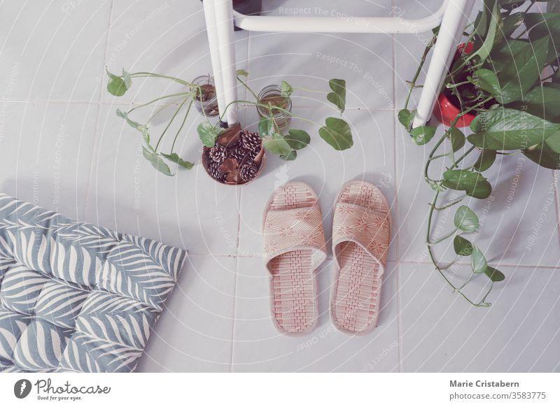 Topfpflanzen für die Innenbegrünung und zur Dekoration des Wohnraums, um einen geschlechtsneutralen und gesunden Lebensraum zu fördern gesunder Lebensraum