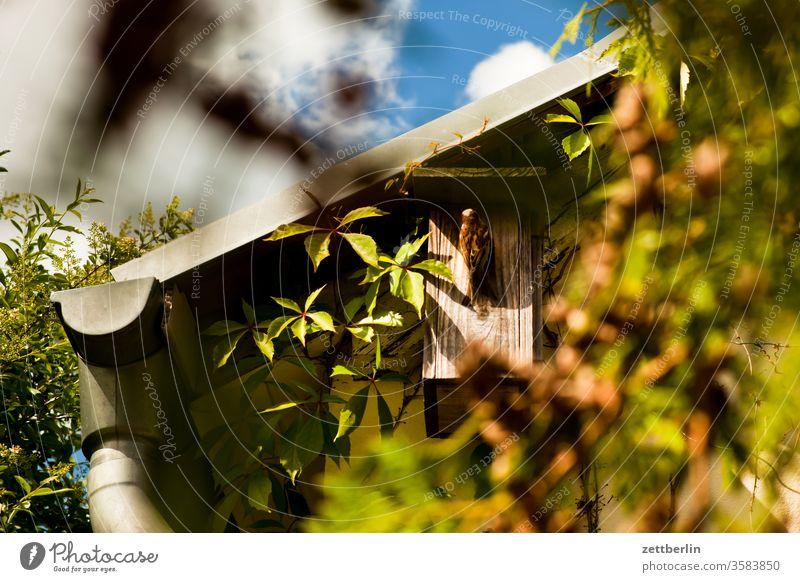 Spatz am Nistkasten spatz haussperling beobachtung vogelhaus vogelbeobachtung dach nisthilfe frühling vogelkasten nistkasten garten kleingarten laube natur