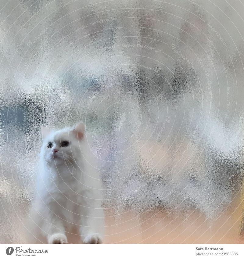 weiße Katze hinter einer Glasscheibe Ausgang Eingang Tier Türrahmen verschwommen