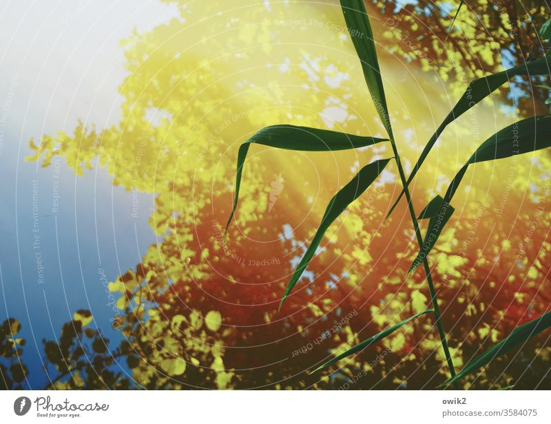 Ried Wasser Reflexion & Spiegelung Spiegelbild Wasserspiegelung Halm Röhricht Sonnenlcht Kontrast windstill leuchten Sonnenlicht Stille friedlich geheimnisvoll