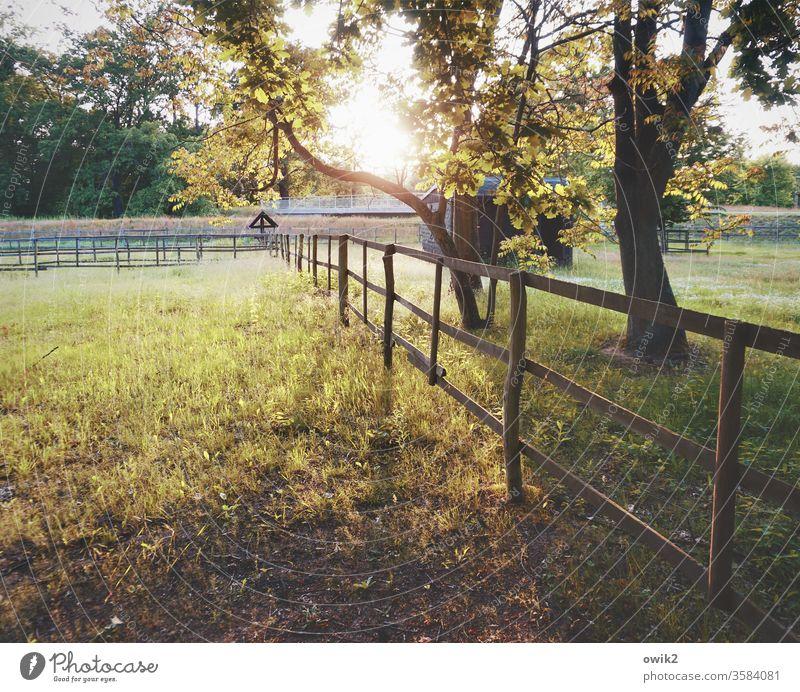 Triftig Wiese Koppel Zaun Holz Abend Bäume Sträucher Gatter Barriere Schutz Begrenzung Sonnenlicht Sonnenuntergang Gegenlicht leuchten strahlend Idylle