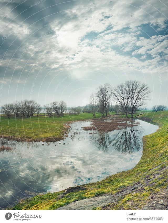 Elbwiesen Himmel Wolken Sonne Sonnenlicht Mühlberg Ostdeutschland Mühlberg/Elbe Brandenburg Fluss Nebenarm sumpfig Wasser Wasseroberfläche