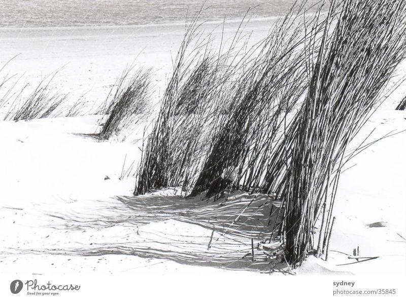 Dünen Meer Strand Gras Sand Wind