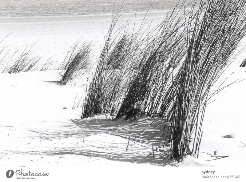 Dünen Strand Gras Meer Sand Wind Strukturen & Formen