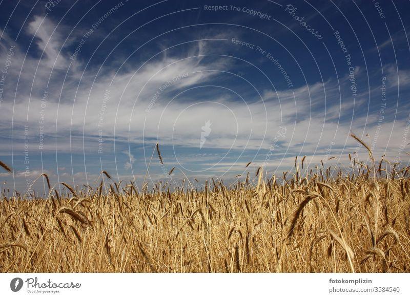 Getreidefeld mit Himmel getreideanbau Getreidehalm Feld Felder Felderwirtschaft Nutzpflanze Kornfeld Landwirst Landwirtschaft Ähren Akrikultur Wachstum Ackerbau