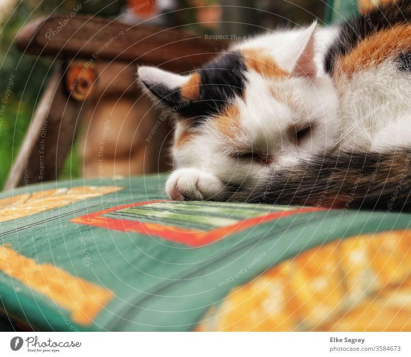Mittagsschläfchen in der Sonne Tier Farbfoto Außenaufnahme Detailaufnahme Tierporträt katze Glückskatze Fell