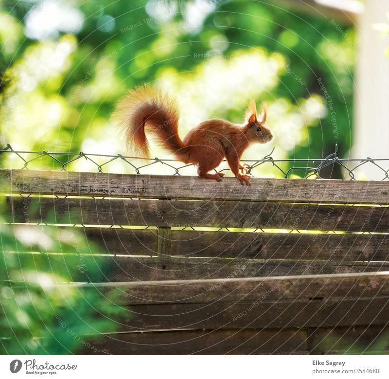 mal über den eigenen Gartenzaun schauen.... Tier Farbfoto Außenaufnahme Natur Tierporträt Wildtier Tag