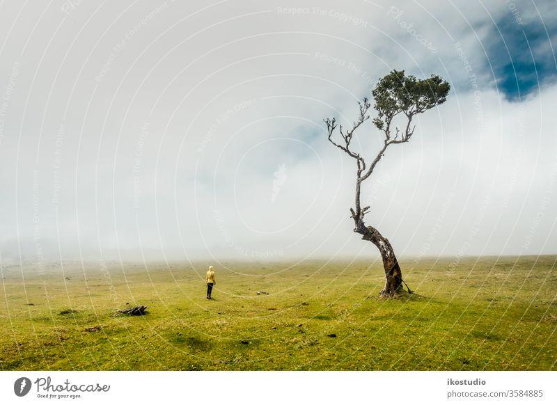 Nur ich und die Natur Frau Baum Wald laufen neblig reisen Feld Umwelt Wiese erkunden Wanderung Abenteuer Hügel Ökologie allein Lifestyle entdecken