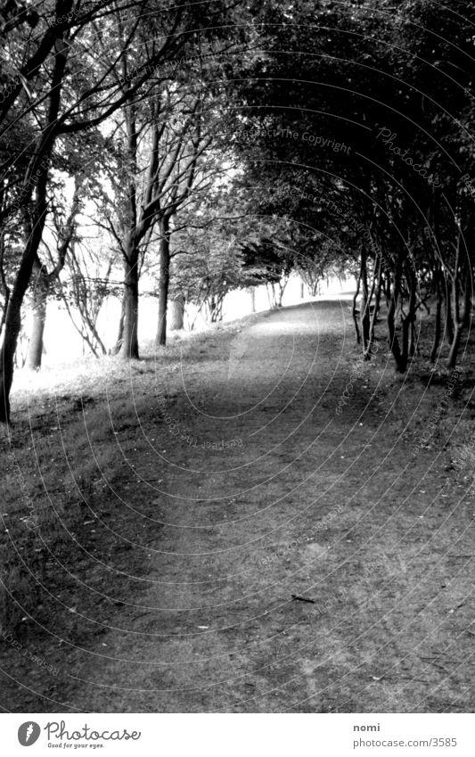 Spaziergang Allee Baum Licht leer Einsamkeit ruhig Wege & Pfade Kontrast Ast