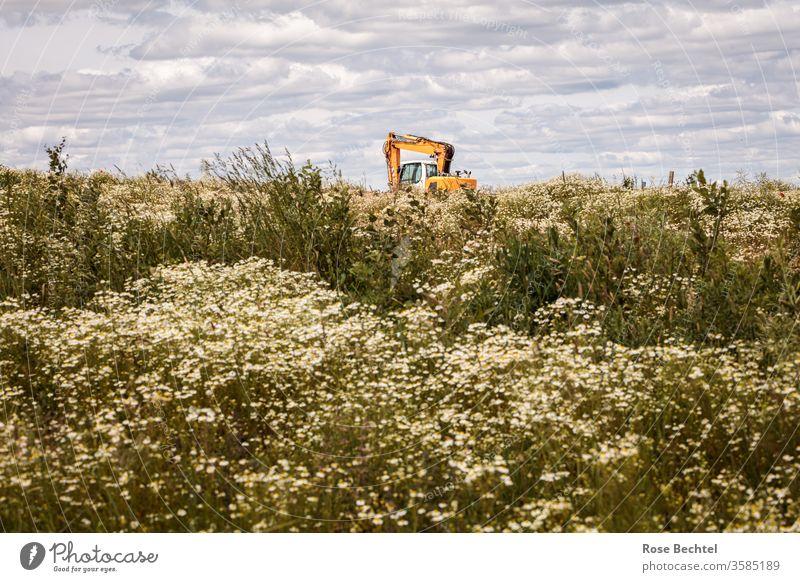 Bagger auf Kamillefeld Baumaschine Baustelle Maschine baugebiet kamillenfeld bewölkt Arbeit & Erwerbstätigkeit Straßenbau Arbeitsplatz Wirtschaft Beruf bauen