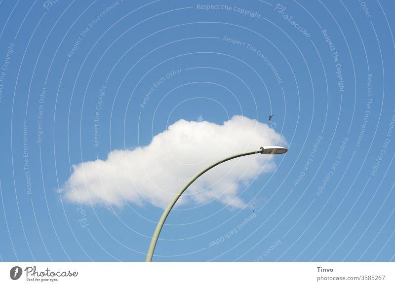 Janz Berlin is eene Wolke Straßenlaterne Straßenbeleuchtung Himmel Vogel Menschenleer schönes Wetter berlin froschperspektive