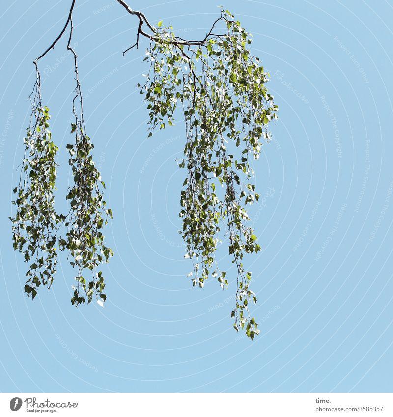 Abhang Ast Baum Blatt blätter grün himmel sonnig hängen frühling gewicht