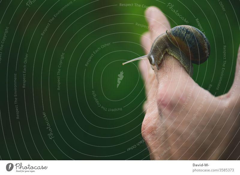 eine Weinbergschnecke kriecht auf einer Hand entlang Schnecke präsentieren gleiten krabbeln Schneckenhaus langsam lahm Schneckentempo Fühler Tier Nahaufnahme