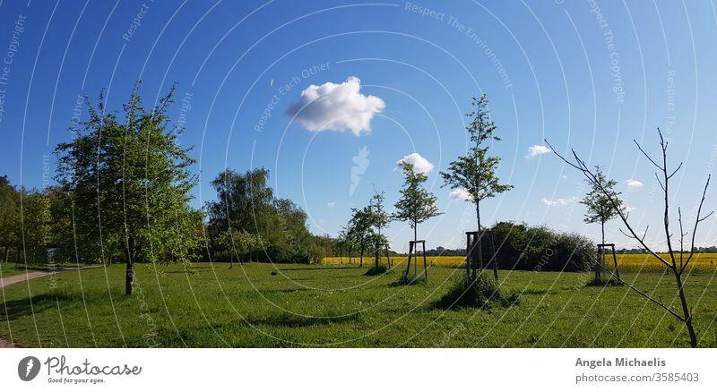 Wolke über Gras- und Rapsfeld-Landschaft mit Bäumen Himmel Grasland Schönheit in der Natur blauer Himmel menschenleer Baum ruhige Umgebung Pflanze