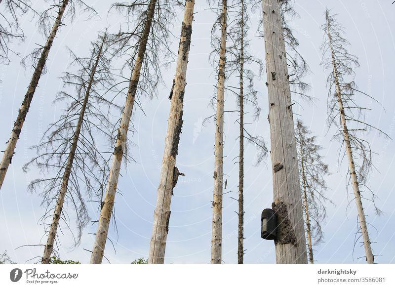 Vogel Haus in einem abgestorbenen Wald Vogelhaus Kasten Nisthilfe Naturschutz Umwelt Waldsterben Borkenkäfer Heim wohnen leben Brut kahl Fichten Klimawandel