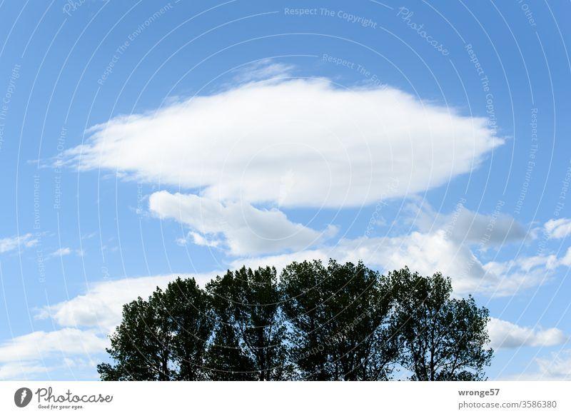Schönwetterwolken über den Wipfeln einer Baumgruppe Schönes Wetter Bäume Baumwipfel Natur Außenaufnahme Menschenleer Himmel Farbfoto Landschaft Sommer Wolken