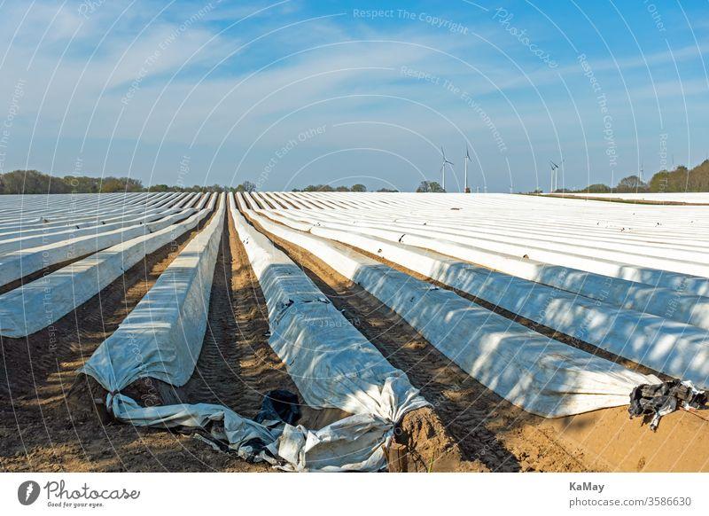 Spargelfeld mit Folienabdeckung in Niedersachsen, Deutschland Feld Landwirtschaft Gemüse Agrar Frühling Saison Jahreszeit Textfreiraum Norddeutschland Europa