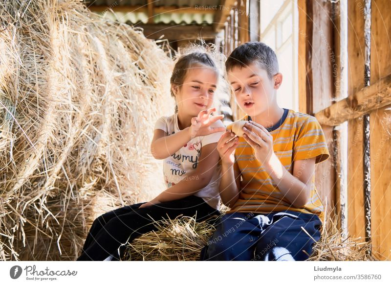 Zwei kleine Kinder schauen neugierig auf ein Hühnerei, das sie während ihres Spiels plötzlich auf dem Heuboden gefunden haben. Eier überrascht Blick Stroh