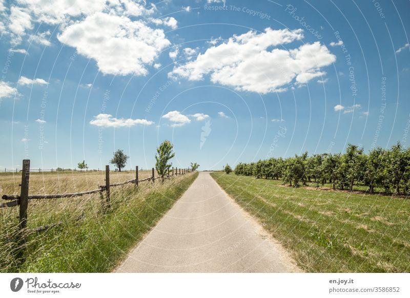 Asphalt Weg Wege & Pfade Straße Wiese Gras Zaun Obstplantage Obstbäume Horizont blau Blauer Himmel Schönes Wetter Wolken Rasen Mitte Mittig Feld Koppel