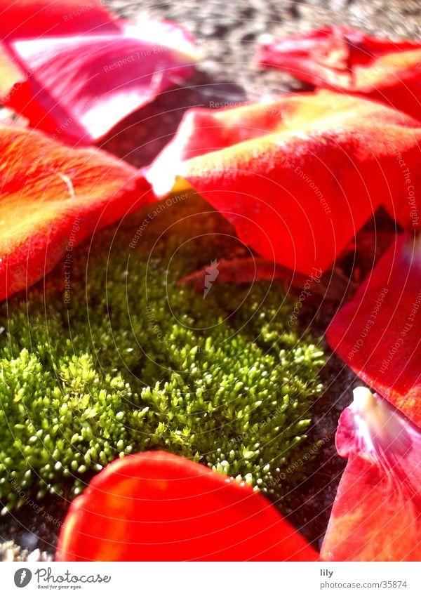 rot-grüne Komposition Natur schön Blatt Herbst Beleuchtung Moos Rose Rosenblätter
